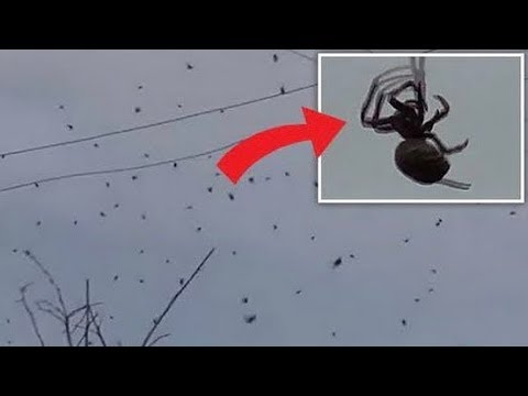 10 Weirdest Things To Fall From The Sky