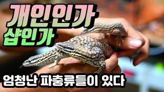 엄청난 파충류들을 키우시는 구독자분을 만나다 도마뱀 a…