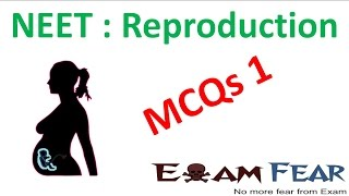 NEET Biology Reproduction : Multiple Choice Previous Years Questions MCQs 1