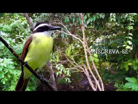 Nova Programação Do Youtube Do Canal Brasil
