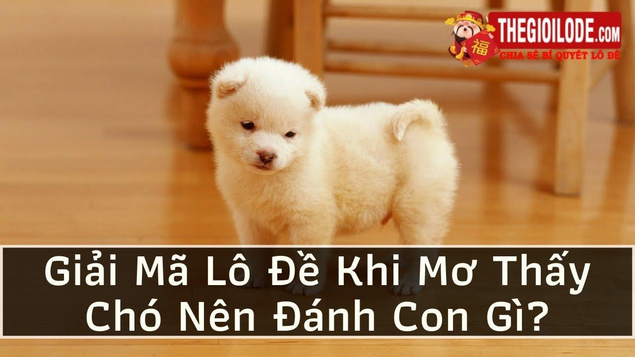 Giải Mã Lô Đề Khi Mơ Thấy Chó Nên Đánh Con Gì?