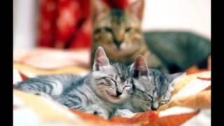 Вы престовляете на сколько мама кошка любит своих котят