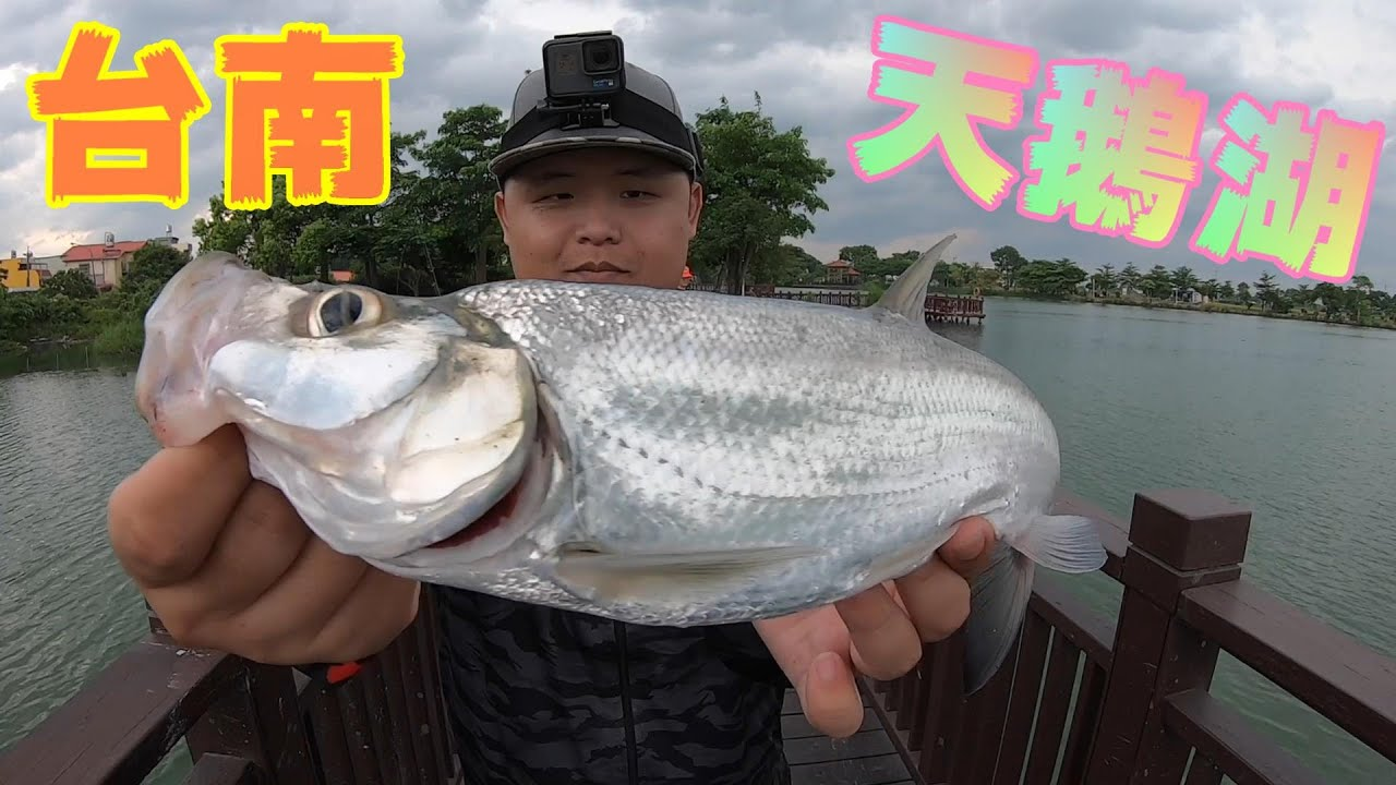 台灣大釣哥的起源地!不斷釣到大魚!
