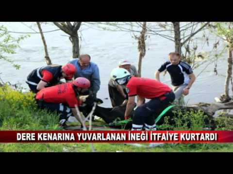DERE KENARINA YUVARLANAN İNEĞİ İTFAİYE KURTARDI (20.04.2016-BOLU)