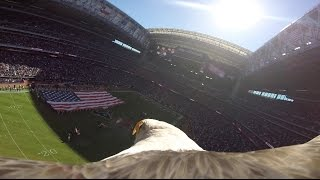 "Educational Bald Eagle ""Challenger"" Soars with Action Camera During National Anthem!!"