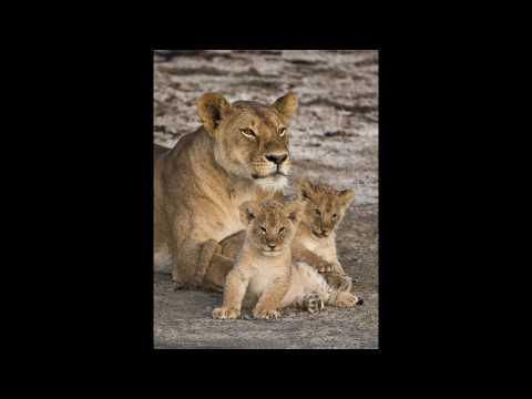 Wild and Free in Tanzania by Gary Maynard