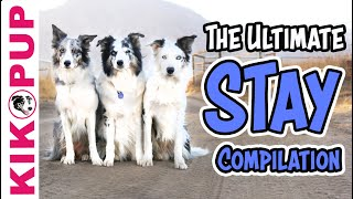 Teach your dog to STAY - The ULTIMATE STAY compilation