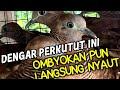 Masteran Perkutut Lokal Sangat Cocok Untuk Perkutut Ombyokan  Mp3 - Mp4 Download