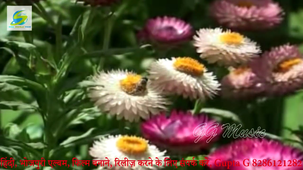 Super Hit Bhojpuri Hot Song      -8832