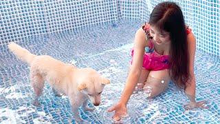 강아지랑 놀려고 수영장까지 사버린 집주인 클라스...ㅗㅜㅑ... / 진돗개 수영