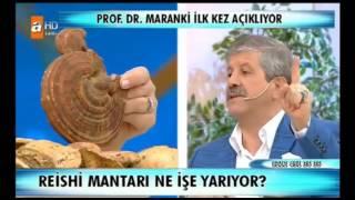 Ahmet Maranki - Kırmızı Reishi Mantarı