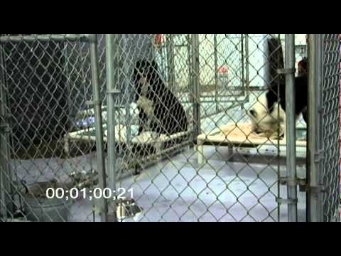 Rescue Animal Mp3 successful calming effect in a Shelter