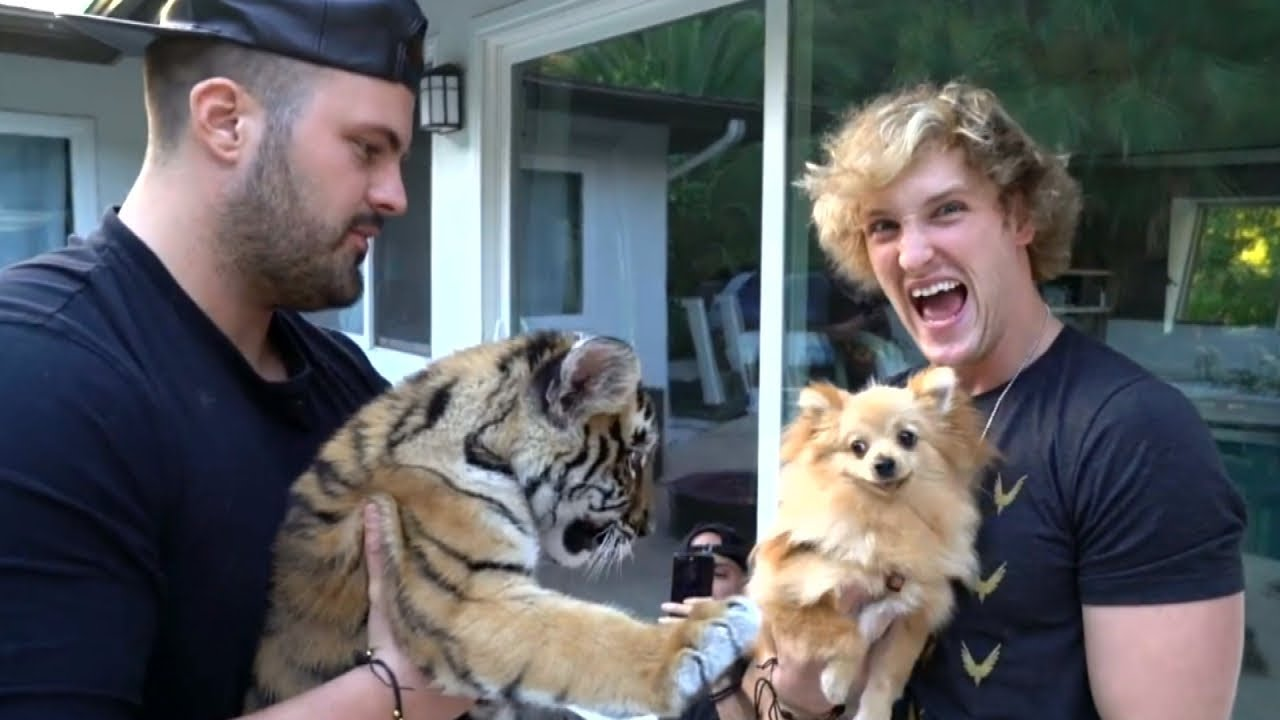 logan-paul-video-leads-to-charges-against-owner-of-baby-tiger