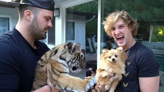 Logan Paul Video Leads to Charges Against Owner of Baby Tiger