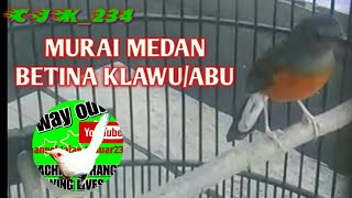 Download MURAI MEDAN BETINA KELAWU / ABU -ABU Mp3