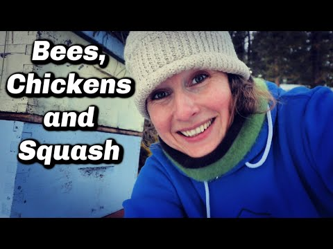 Bees, Chickens and Squash in the North | Update Farm VLOG