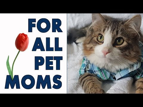 Pet Moms Appreciation Mother's Day With Kitten Cat and Cats 2018 🌷