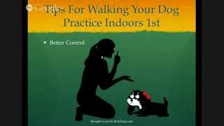 Dog Walking Tips - Practise Indoors First (3 Of 5)