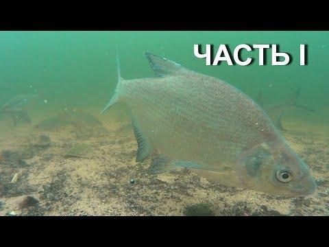 Подводное видео.Осень.Знакомство.Часть I.Водохранилище.