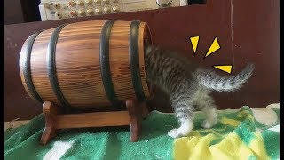 Cat And Kittens So Funny In Weekend | Funny Cat Vines 2018 [Funny Pets]