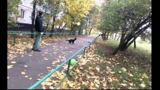 Богдан- собака, которая поднимает настроение.