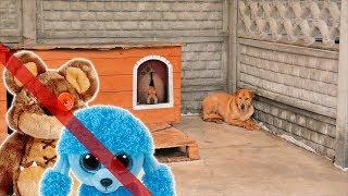 Żywe zwierzę to nie zabawka -  nie wybieraj go na prezent