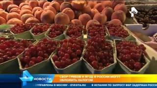 Россиян напугали возможным налогом на сбор грибов и ягод