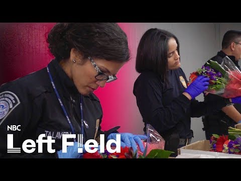 Colombia's Cash Crop:  Flowers for Valentine's Day | NBC Left Field