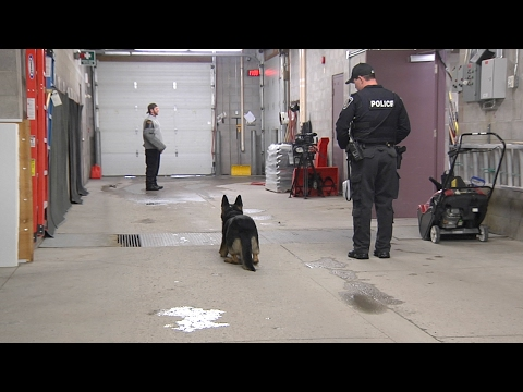 Cogeco TV spends some time with the Peterborough K9 Unit