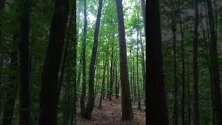 Rezerwat Rajchowa Góra - Śpiewający las