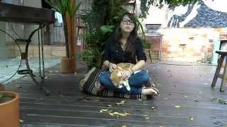 Vlog: Anestesia, Gatos e Mudanças no Canal