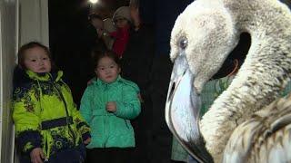 В Якутии на полностью замерзшем озере нашли фламинго.