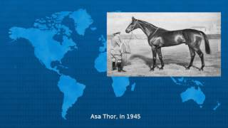 Triple Crown Of Thoroughbred Racing  - Wiki
