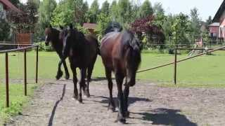 Stajnia Black&White w Olszynach -  konie stajni
