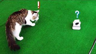 움직이는 홈카메라를 본 고양이 반응
