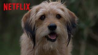 Benji's Clever Plan | Benji | Netflix