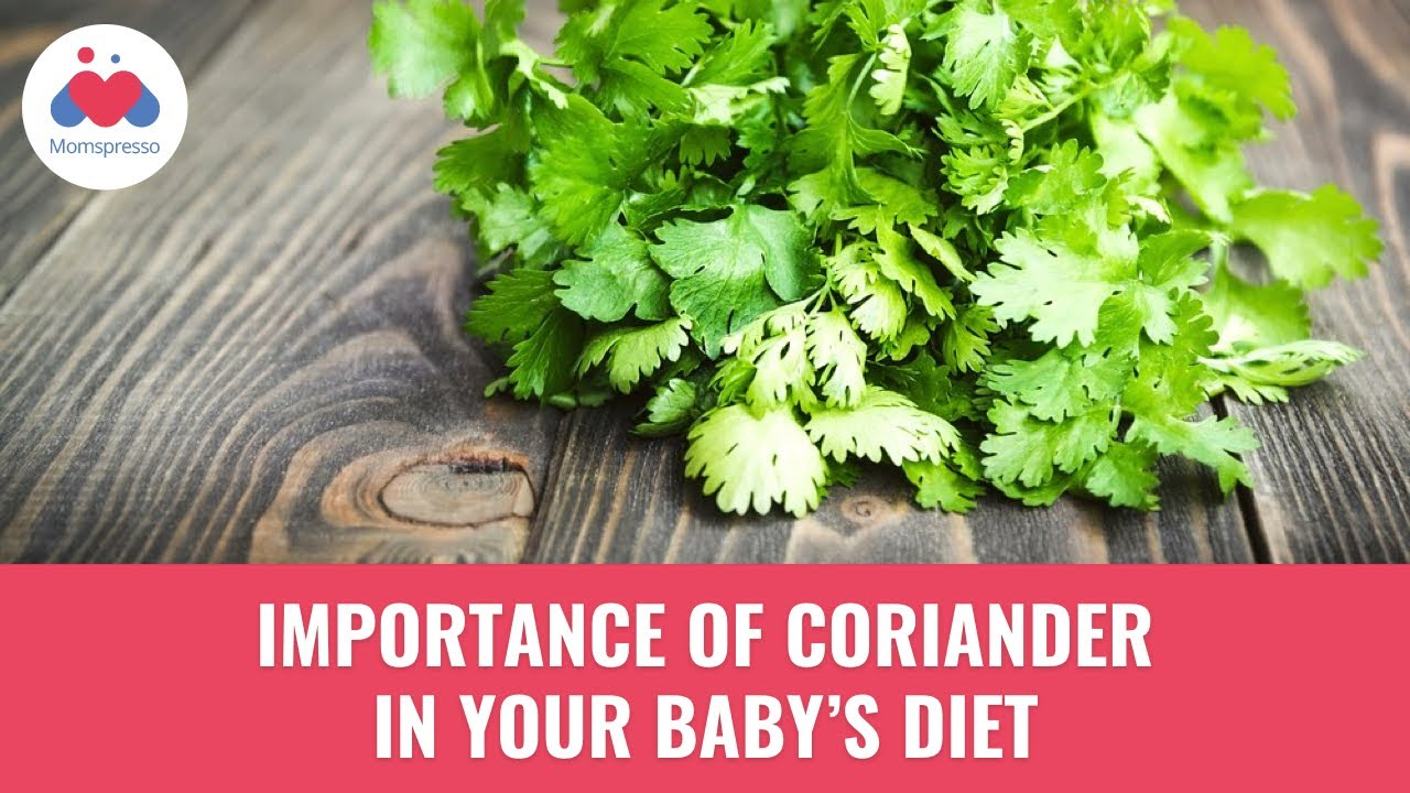 importance of coriander in baby's food | benefits of coriander in baby's  diet