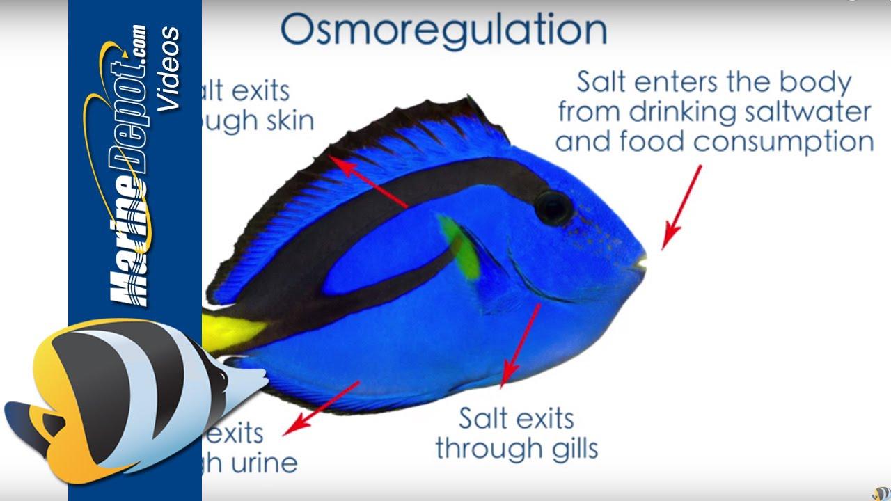 Fish tank measurements - Fish Tank Measurements