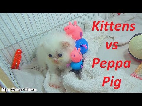 Kittens Playing With Peppa Pig | Kittens And Peppa Pig | Meo Cover Home