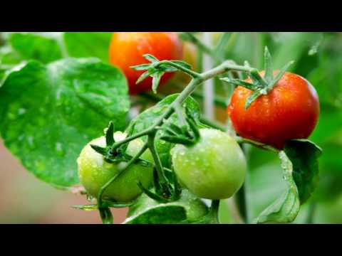 Как применять сульфат магния для подкормки растений