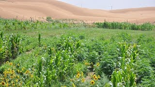 CHINA Transforma sus Desiertos en Tierra Fértil