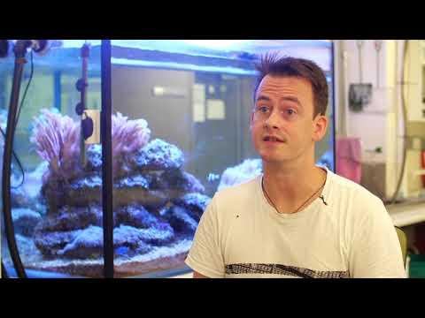 Видео: Through the eyes of animals
