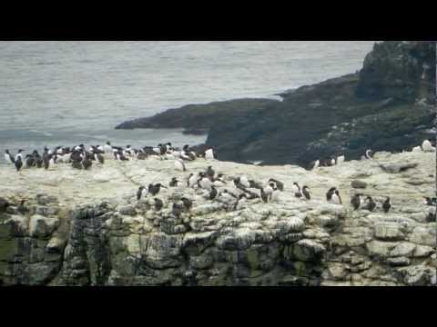 Rathlin Island Trip