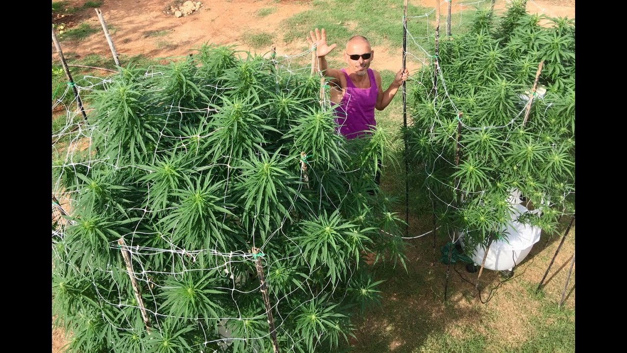 Growing Aeroponic Cannabis Clones On A Tower Garden