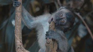 Aangevallen door apen!! - Singapore (VLOG) #7