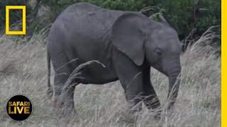 Safari Live - Day 249 | National Geographic