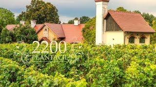 Region ten słynie z tradycyjnej uprawy winorośli od wielu pokoleń!