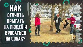 Как отучить прыгать на людей и бросаться на собак(один из способов)