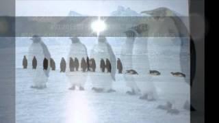 皇帝ペンギンの生態をまとめてみました 過酷な環境で涙ぐましい彼らの生...