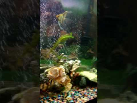 My freshwater tropical Community tank